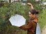 PARASOL ENTOMOLOGICZNY 50cm
