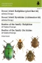 BEETLES OF THE FALILY HALIPLIDAE AND BYRRHIDAE OF CENTRAL EUROPE